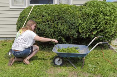 Teenager Helping with Yard Work
