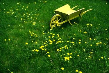 Decorative yellow wheelbarrow in overgrown lawn
