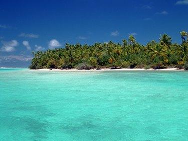 Fan palm trees on beach