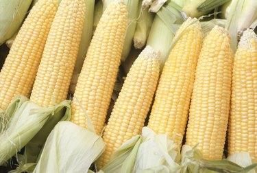 Corn cobs, (Close-up)