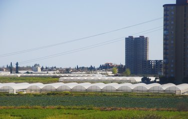 Greenhouses in the city