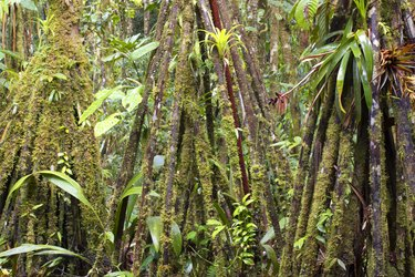 Rainforest interior, Ecuador
