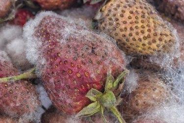 rotten strawberries background