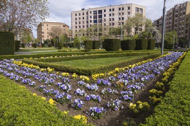 Garden City - Jardines de Ciudad
