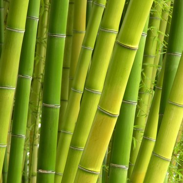 Peaceful Bamboo