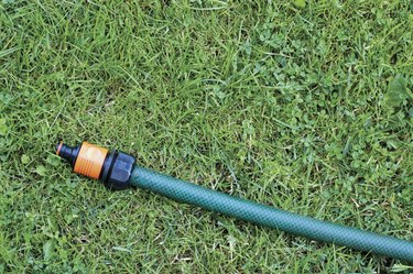 Hose on grass, Clover and Dandelion leaves, close-up