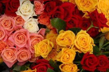 Various colorful roses