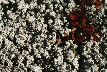 Soil texture with petals