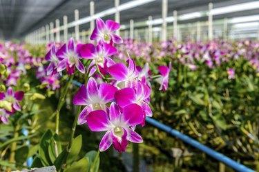 Orchid plant nursery