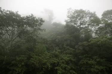 Mist over tropical forest, elevated view