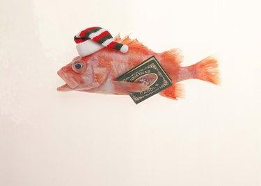Cod with Santa hat and book of carols
