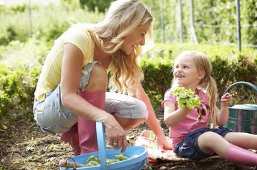 Mother And Daughter Kneeling Down Harvesting Radish On Allotment