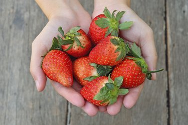 Fresh strawberries in the hands on a wood background