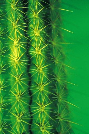 Detail of cactus