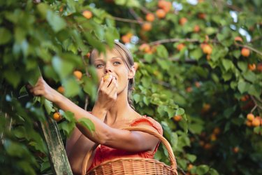 Pretty, young woman picking apricots