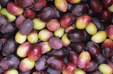 Freshly picked olives, (Full frame)