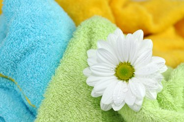 Daisy on Clean Towels