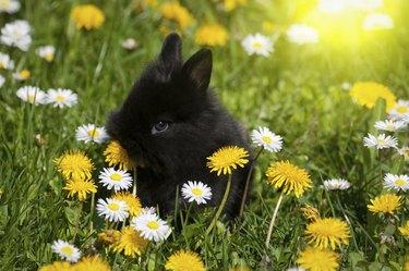 Rabbit baby bunny in green grass