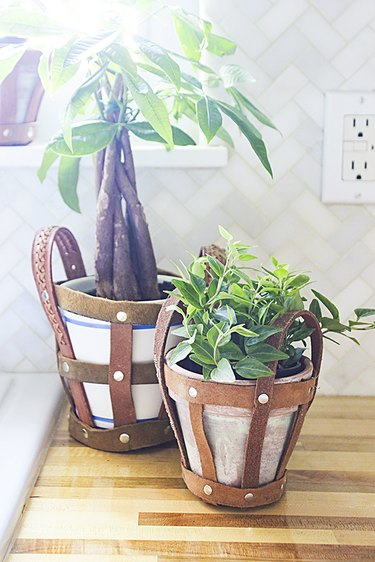 Plant holders in kitchen