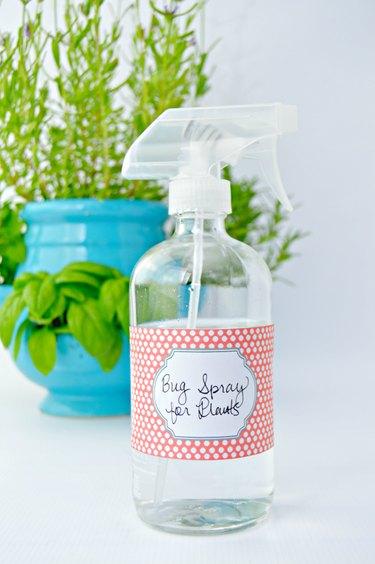 Homemade bug spray to use on plants