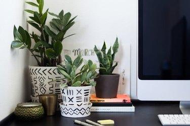 Indoor potted plants.