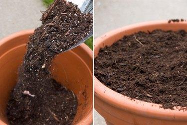 Adding potting soil
