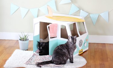 Two cats sitting in VW bus