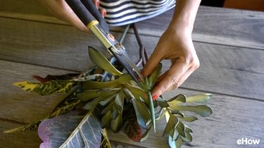 Removing fake-looking part from a faux aloe plant.