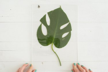 Placing leaf between plexiglass