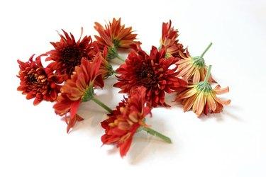 cut chrysanthemums