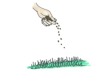 dropping seeds on lawn