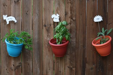 Hanging herb planters with metal barbecue skewer garden markers