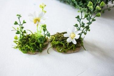 Plants glued onto cardboard