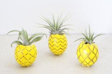 Pineapple air plant holders