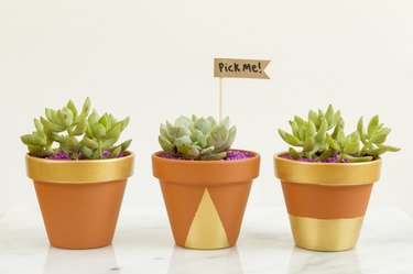 Three planters filled with succulents