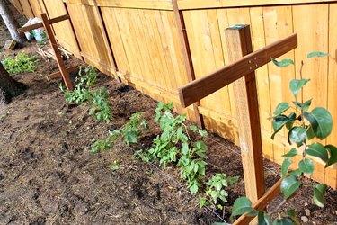 how to build a raspberry trellis