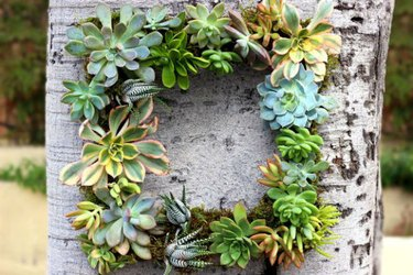 A succulent wreath hanging from a tree