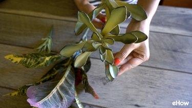Artificial maguey succulent plant.