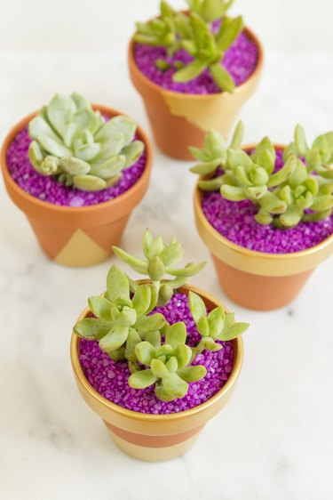 Planted succulents with colorful aquarium rocks covering the soil