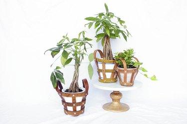 Leather belt plant holders