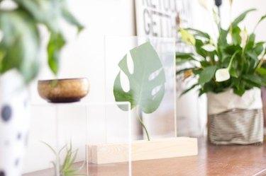 plexiglass display