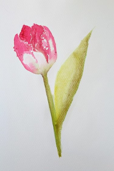 A watercolor of a tulip.