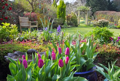 Springtime in English domestic garden.
