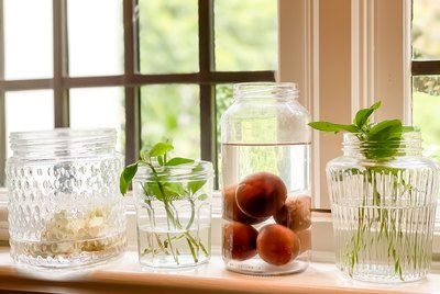 indoor window sill gardening