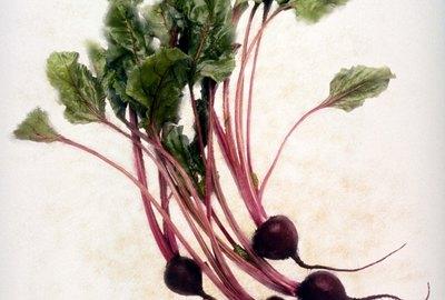 Bushel of beets