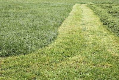 Track cut grass