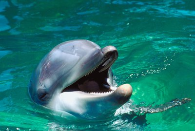 How to Make a Model Dolphin