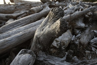 USA, Washington, Olympic National Park, driftwood on Kalaloch Beach