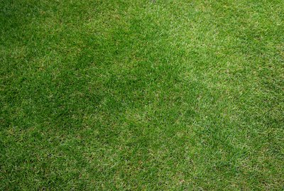 Grass, full frame