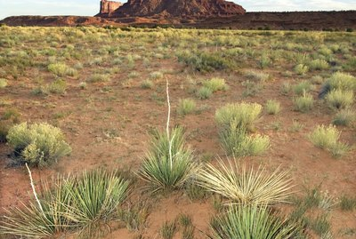 Butte in Monument Valley Navajo Tribal Park
